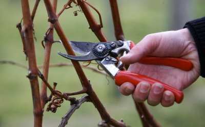 Lessons From The Garden – Pruning