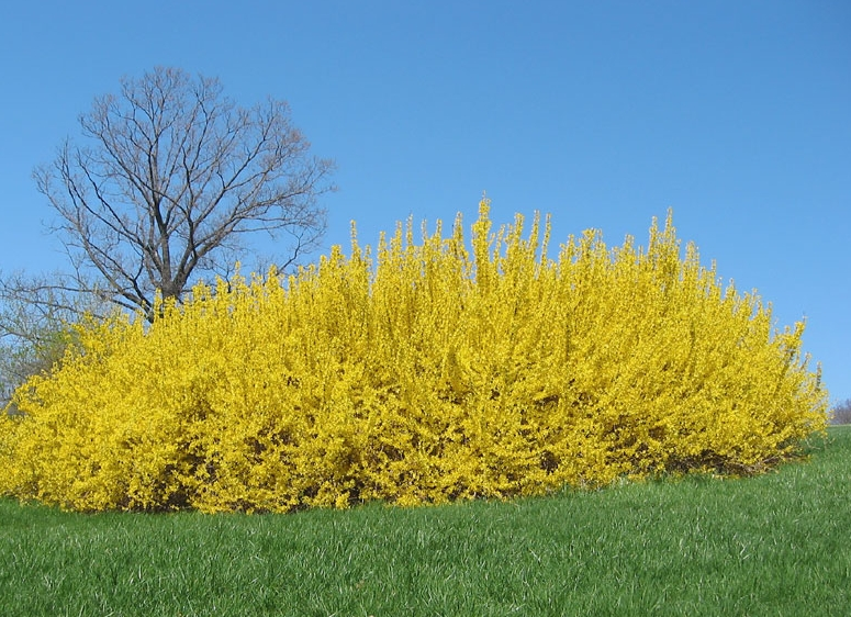 Forsythia Is Evil? | Revelations From The Road
